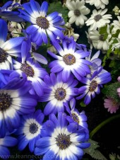 melbourne-gardens-flowers-city-rain-1