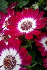 melbourne-gardens-flowers-city-rain-2