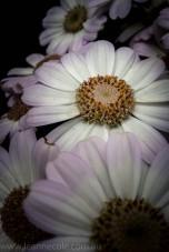 melbourne-gardens-flowers-city-rain-3