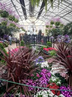 melbourne-gardens-flowers-city-rain-6