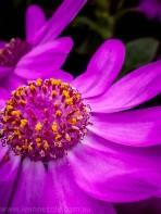 melbourne-gardens-flowers-city-rain-7